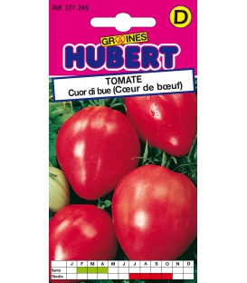 Graines de Tomate Cuor Di Bue (Coeur de Boeuf)