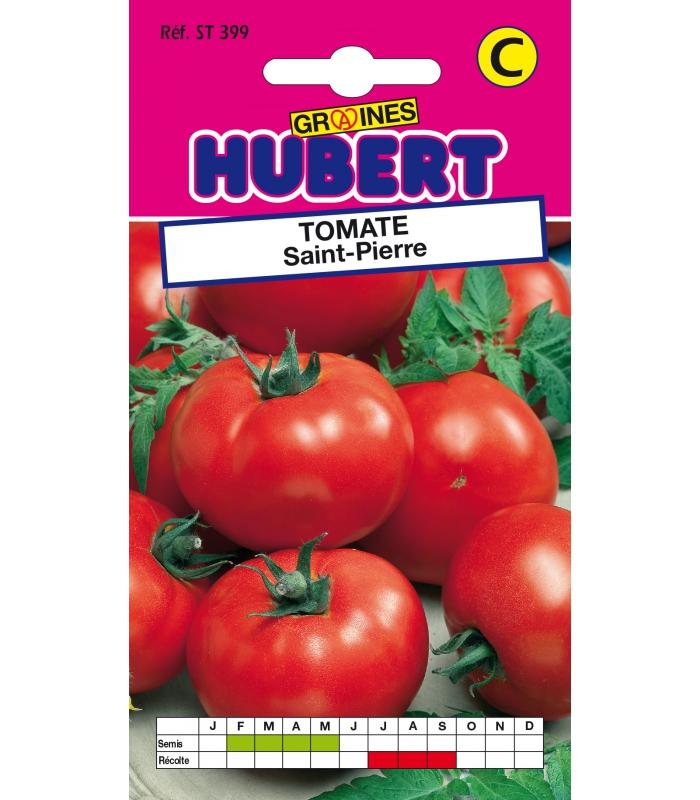 Graines a semer de tomates saint pierre - Comment recuperer des graines de tomates ...