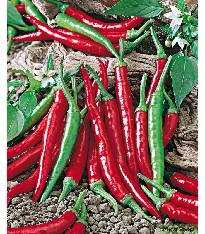 Sachet de graines a semer de piment de cayenne - Piment de cayenne culture ...