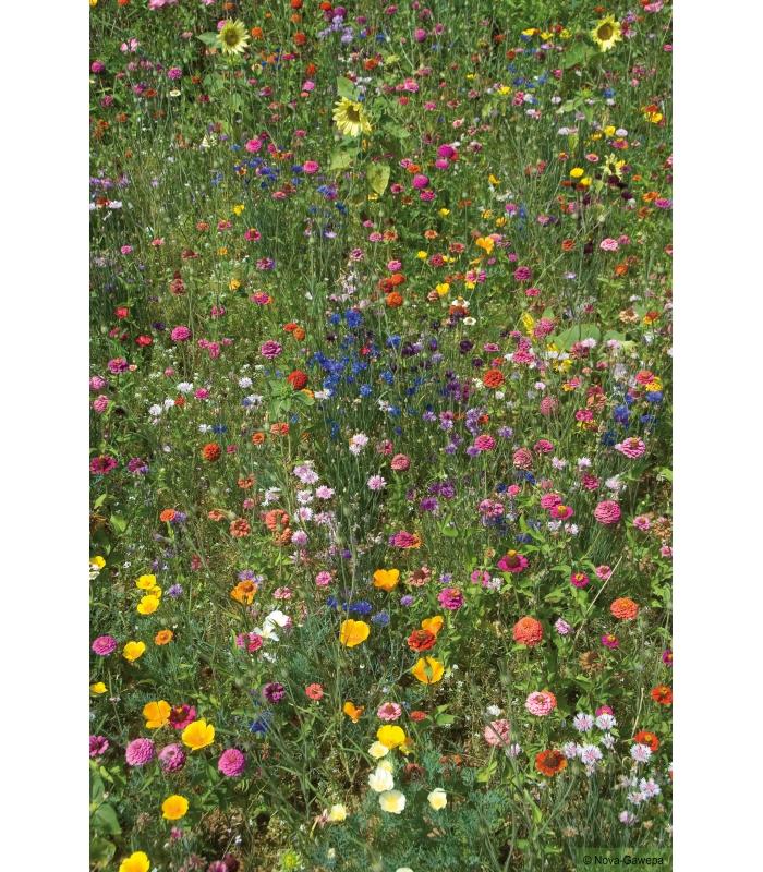 Melange de graines a semer d 39 annuelles pour oiseaux - Graines de tournesol pour oiseaux ...