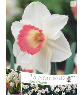 15 Narcisses Pink Charm