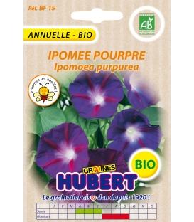 Graines d'Ipomée Pourpre BIO - © Image protégée téléchargement interdit !