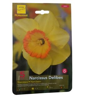 5 Bulbes de Narcisses à Couronne Delibes