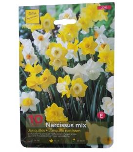 10 Bulbes de Narcisses Mix
