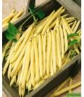 Graines de Haricot Beurre Nain Major BIO © Image protégée, téléchargement interdit !