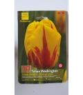 10 Bulbes de Tulipes Washington