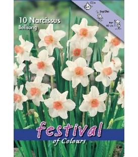10 Bulbes de Narcisses Bellsong