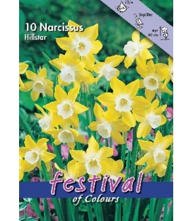 10 Bulbes de Narcisses Hillstar