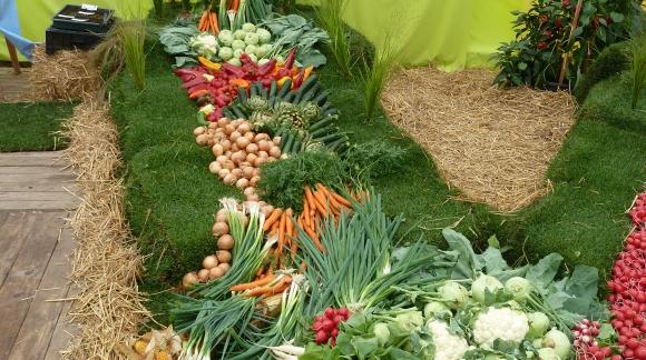 vente graines en ligne achat semences bio fleurs l gumes. Black Bedroom Furniture Sets. Home Design Ideas