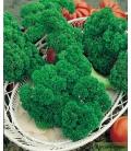Graines de Persil frisé vert foncé