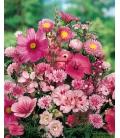 Graines de Fleurs pour Bouquets Roses