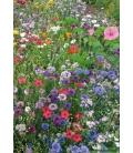 Melange de graines de fleurs pour gazon japonais
