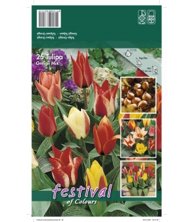 25 Tulipes Botaniques Greigii Mix