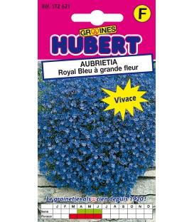 Graines d'Aubrietia Royal Bleu à Grande Fleur