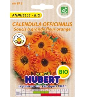 Graines de Soucis à grande Fleur Calendula Orange