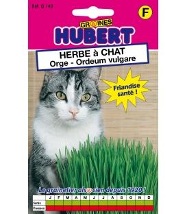 Graines d'Herbe à Chat Orge © Image protégée téléchargement interdit !