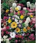 Graines de Fleurs Annuelles Naines Variées - © Image protégée téléchargement interdit !éléchargement