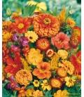 Graines de Fleurs pour Bouquets Oranges © Image protégée téléchargement interdit !