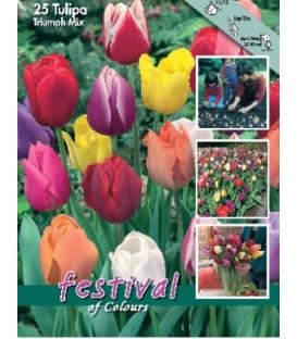 25 Tulipes Triomphe Variées