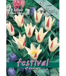 10 Tulipes Kaufmanniana Johann Strauss