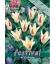 10 Bulbes de Tulipes Kaufmanniana Johann Strauss
