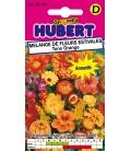 Graines de Fleurs pour Bouquets © Image Protégée Téléchargement interdit !