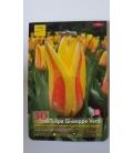 10 Bulbes de Tulipes Giuseppe Verdi
