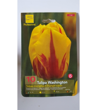 10 Bulbes de Tulipes Triomphe Washington