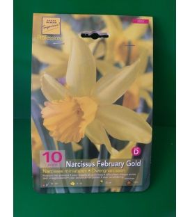 10 Bulbes de Narcisses Miniatures February Gold