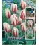 25 Bulbes de Tulipes Triomphe Happy Generation