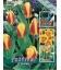 25 Bulbes de Tulipes Botaniques Stresa