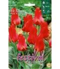 10 Bulbes de Tulipes Botaniques Chaperon Rouge