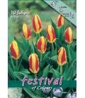 10 Bulbes de Tulipes Botaniques Stresa