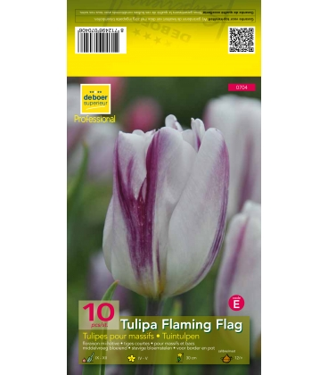 10 Bulbes de Tulipes Flaming Flag
