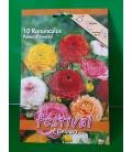 10 Bulbes de Renoncules à Fleur de Pivoine Variées