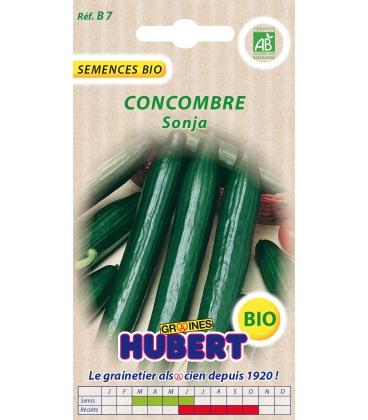 Graines BIO de Concombre Sonja