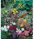 Graines de Fleurs Annuelles pour Rocailles © Images protégées téléchargement interdit !