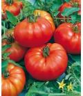Graines de Tomate Marmande