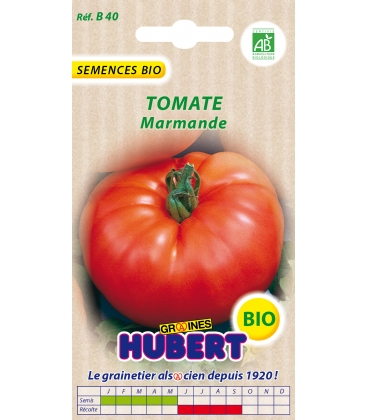 Graines de Tomate Marmande BIO