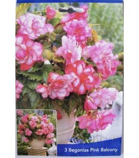 3 Bulbes de Bégonia Pink Balcony