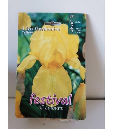 1 Rhizome d'Iris Germanica Jaune