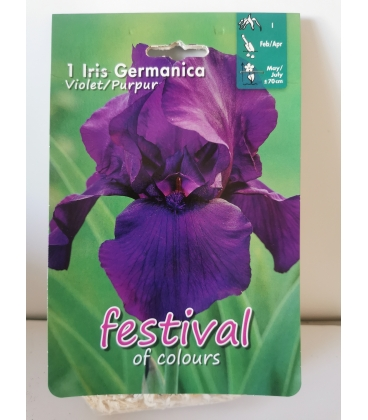 1 Rhizome d'Iris Germanica Violet Pourpre