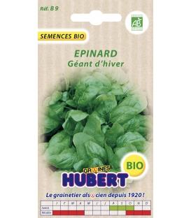 Graines d'Epinard Géant d'Hiver BIO