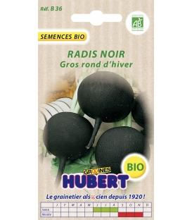 Graines de Radis Noir Gros Rond d'hiver BIO