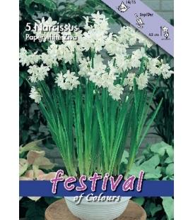 5 Bulbes de Narcisses Paperwhite Ziva