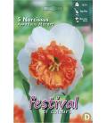 5 Bulbes de Narcisses Amadeus Mozart