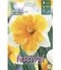 5 Bulbes de Narcisses Orangerie