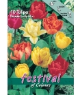 10 Bulbes de Tulipes Botaniques Doubles Hâtives Variées