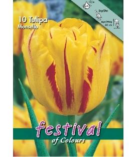 10 Bulbes de Tulipes Monsella