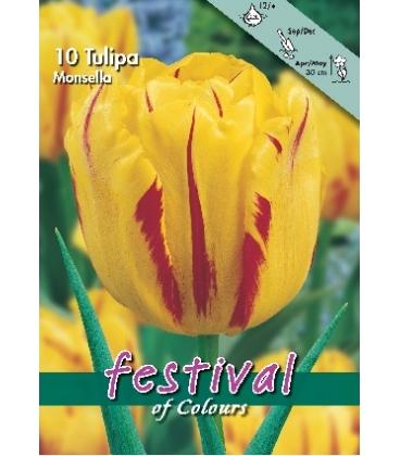 10 Bulbes de Tulipes Monsella Calibre 12+